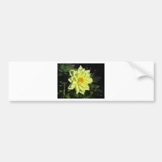 春の独身ので黄色いダリアの花 バンパーステッカー