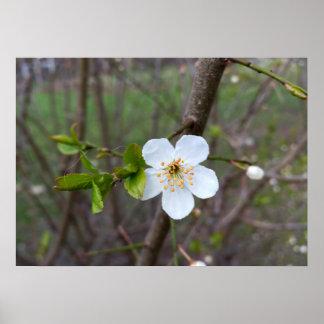 春の白 ポスター