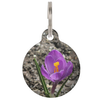 春の紫色および黄色のクロッカスの花の写真 ペット ネームタグ