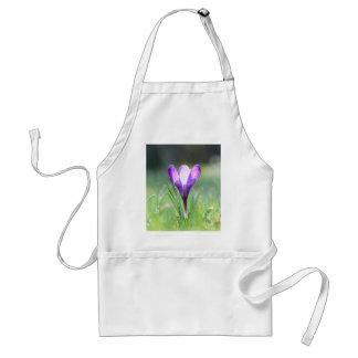 春の紫色のクロッカス スタンダードエプロン