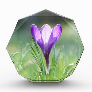 春の紫色のクロッカス 表彰盾