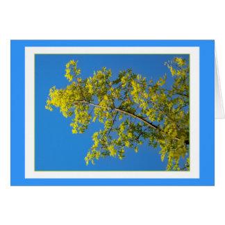 春の緑のオークの木 カード