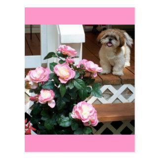 春の花とのシーズー(犬) Tzu ポストカード