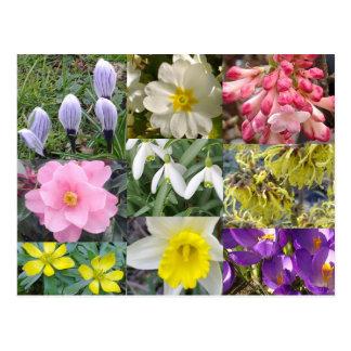 春の花の郵便はがき ポストカード