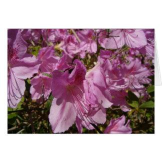 春の花 カード