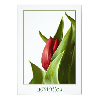 春の赤いチューリップの誕生-テンプレート カード