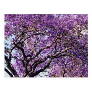春の開花の花のキリモドキの木 ポストカード