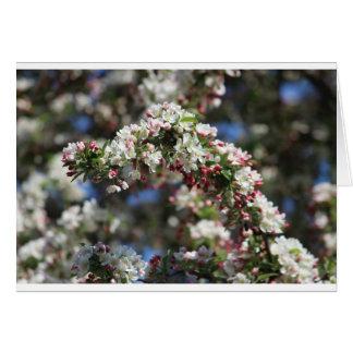 春の開花 カード