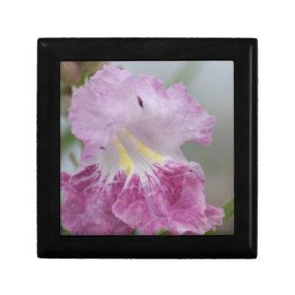 春の静かに紫色および黄色キリモドキの花 ギフトボックス