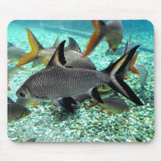 春の魚、スペインの群れ マウスパッド