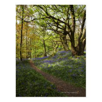 春のbluebellの森 ポストカード