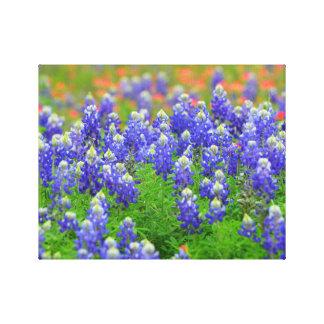 春のBluebonnets キャンバスプリント