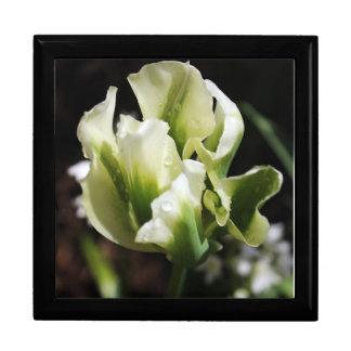春はチューリップの庭の植物の写真撮影に沢山与えます ギフトボックス