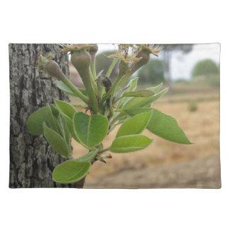 春タスカニー、イタリアの芽を搭載するナシ木の小枝 ランチョンマット