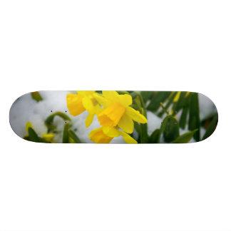 春時間に来られる スケートボード