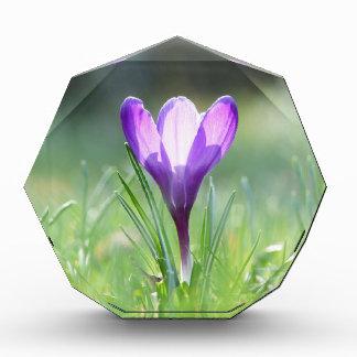 春03.3の紫色のクロッカス 表彰盾