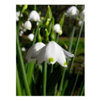 春Snowdrops ポストカード