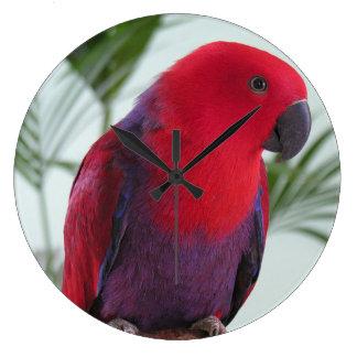 時計の美しいEclectusのオウムの赤いメスペット ラージ壁時計