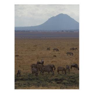 景色タンザニアトムWurl ポストカード