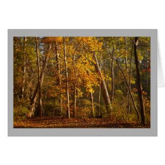 景色45のカラフルの秋の森林 カード