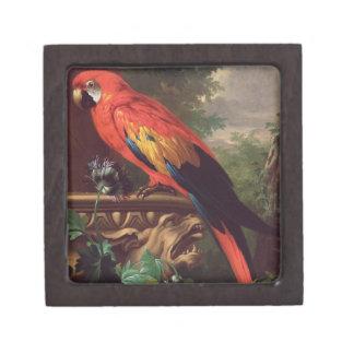 景色(キャンバスの油)の深紅のコンゴウインコ ギフトボックス