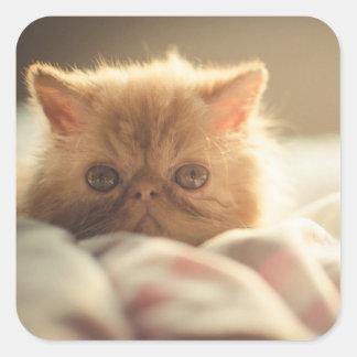 暖かい甘い子猫の滞在 スクエアシール