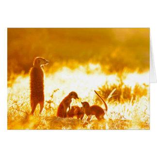 暖かさ-季節のごあいさつ挨拶状 カード