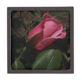 暗いピンクのバラのギフト用の箱 ギフトボックス