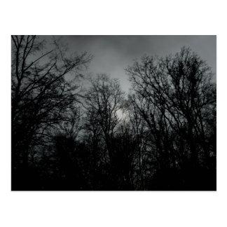 暗い木 ポストカード