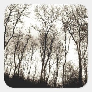暗い森林 スクエアシール