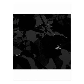 暗い紅葉 ポストカード