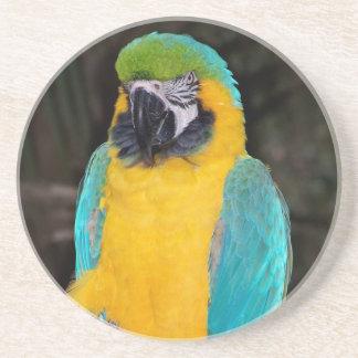 暗い背景に対する青および金ゴールドのコンゴウインコ コースター