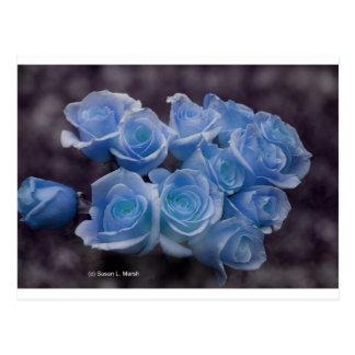 暗い背景に対する青く白熱[赤熱]光を放つなバラ ポストカード