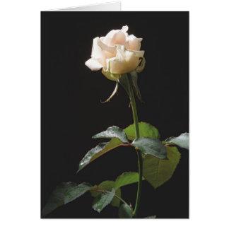 暗い背景のクリーム色のバラ カード