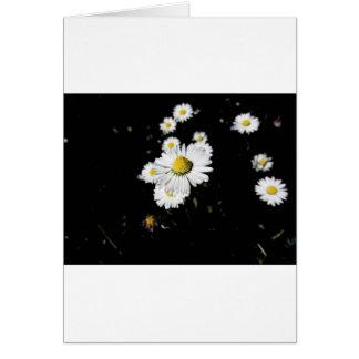 暗い背景の白いデイジーの花 カード