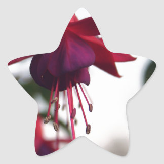 暗い赤紫色 星シール