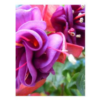 暗い赤紫色Dio ポストカード