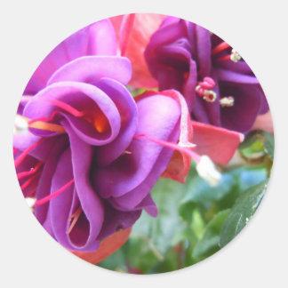 暗い赤紫色Dio ラウンドシール