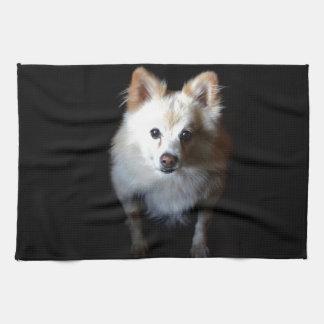 暗闇のポメラニア犬犬 キッチンタオル