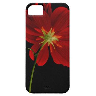 暗闇または赤のガーベラの写真撮影の白熱 iPhone SE/5/5s ケース