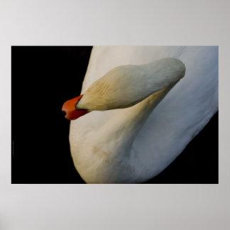 暗闇2の白鳥 ポスター