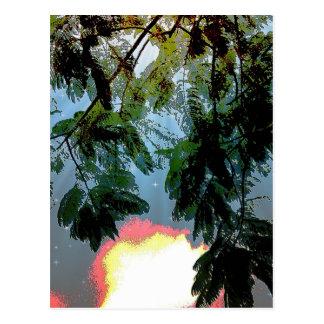 曇った星明かりの空に対するシダの木の葉 ポストカード