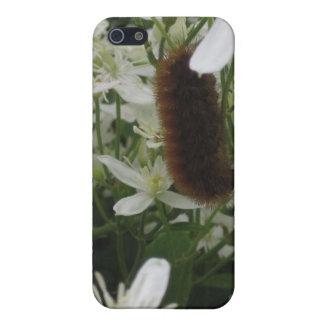 曖昧な幼虫の箱 iPhone 5 COVER