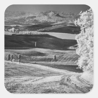 曲がりくねった道の黒く及び白い眺め スクエアシール
