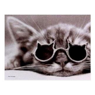 最もクールな猫の生きた郵便はがき ポストカード