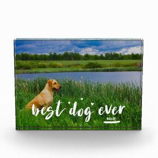 最も最高のな犬はハートが付いている一流の写真のブロックを加えます フォトブロック