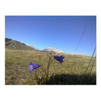最初に山の春のサフラン ポストカード