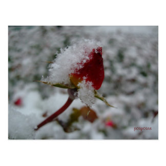最初雪 ポストカード