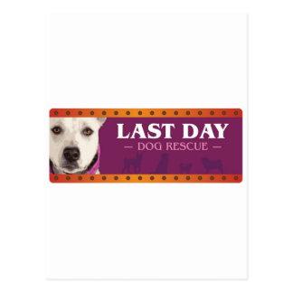 最後の日犬の救助 ポストカード