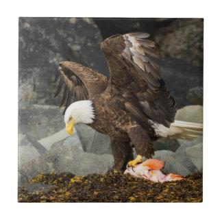 最終的な白頭鷲 タイル